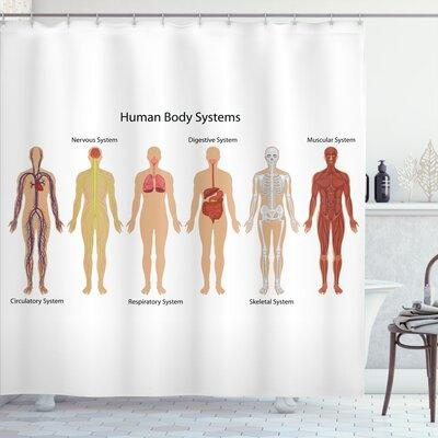 Ambesonne Human Anatomy Human Body With Central Nervous N...
