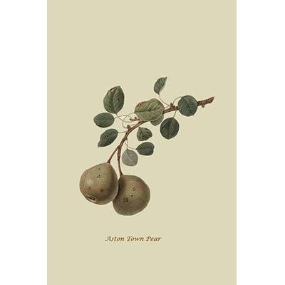 Buyenlarge Aston Town Pear' by William Hooker Graphic Art...