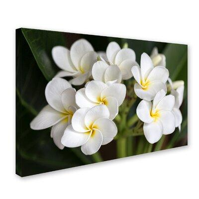 "Trademark Art ""Plumeria Flowers"" by Pierre Leclerc Photog..."