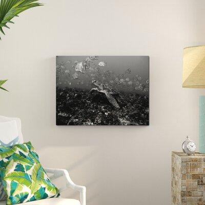 Bay Isle Home 'Jelly Fish Turtle' Photographic Print on C...