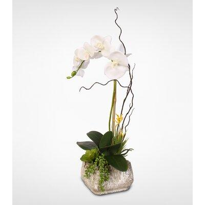 Rosecliff Heights Phalaenopsis Silk Orchid with Succulent...